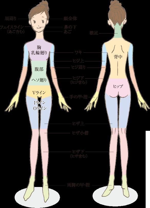 脱毛施術:部位エリアの図